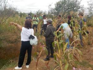 Pratique innovante pour la conservation des sols: visite d'une parcelle de maïs en pluviale conduite en zero labour et fertilisation organique à partir compost( résidus de culture et effluents d'élevage)