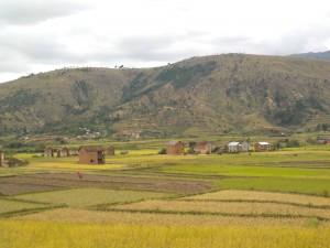 Vallée de la Mandona ( sud ) plaine rizicole