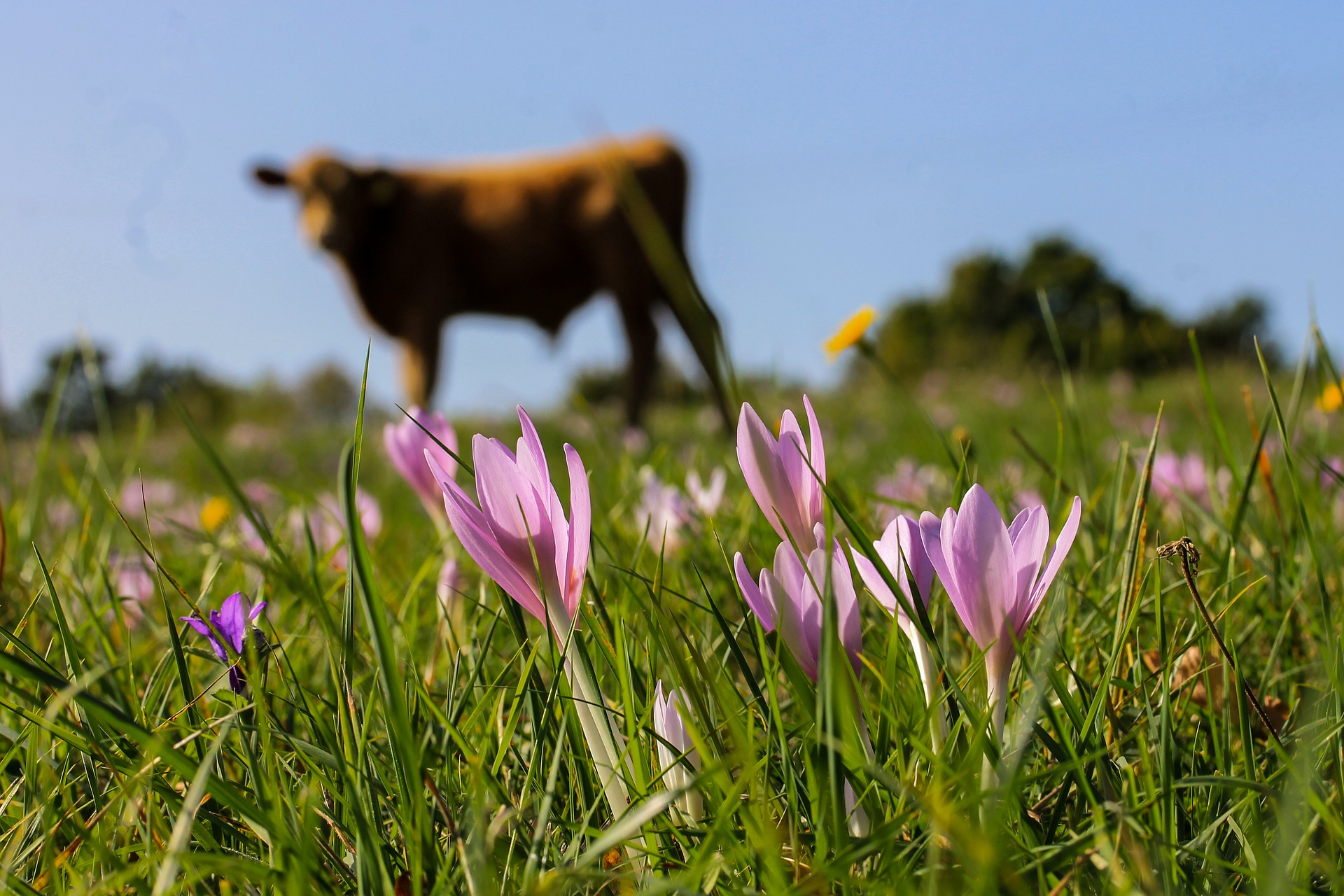 saffron-2032345_1920